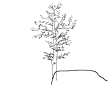 #1005 German Tree