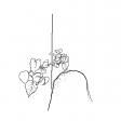 #1192 Hydrangea With Knee