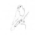 #1252 Cuckoo, Stuffed